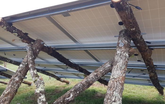 CéléWatt met en service son parc solaire sur bois brut
